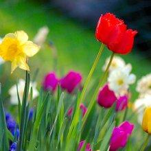 Gør huset klar til foråret med disse tiltag